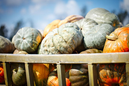 Big pile of pumpkins on hay in a wooden cart the season of harvest. Happy Thanksgiving Day. Harvest festival. Autumn background.