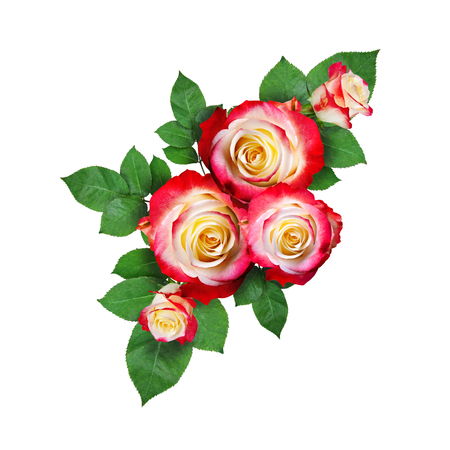Colorful roses with leaves in a corner arrangement isolated on white background. Flat lay. Top view. Isolated object .