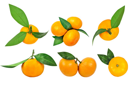 Set of tangerines with leaf and tangerine leaves isolated on white background.
