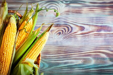 Fresh corn on cobs on wooden table, closeup. Background with copy space. Selective focus. Top view.