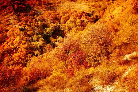 Autumn landscape beautiful colored trees. Wonderful picturesque background. Selective focus.