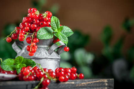 Fresh red currants in a Cup on a dark rustic wooden table. Background with space for copying. Selective focus. Banque d'images - 151050560