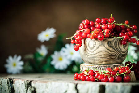 Fresh red currants in plate on dark rustic wooden table. Background with copy space. Selective focus. Archivio Fotografico - 151214997