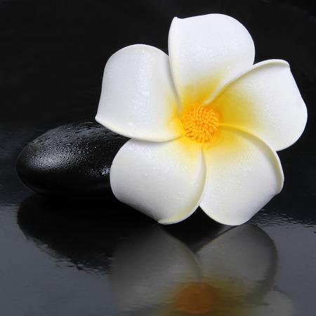 zen stone with frangipani plumeria flower  photo