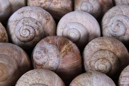 gastropoda: background snail shells