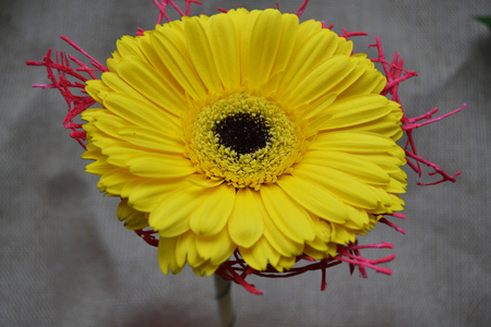 The close up photo of yellow bright flower Reklamní fotografie