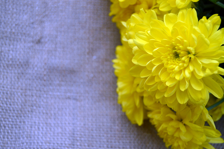 The close up photo of yellow bright flowers