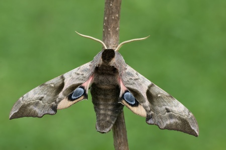 a moth Stock Photo - 8661208