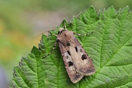 moth Stock Photo - 8975042