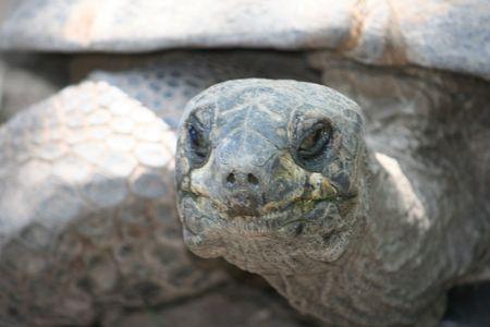close up turtle head Banco de Imagens