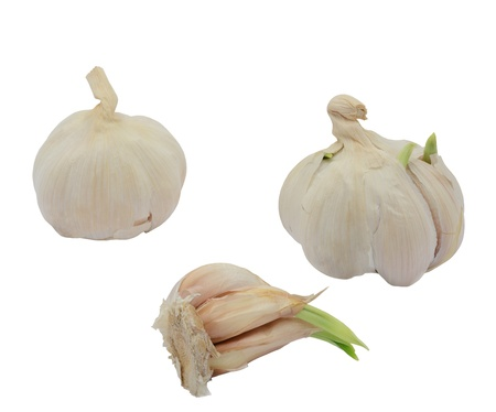 Sprouting garlic whole and a clove isolated on white background photo