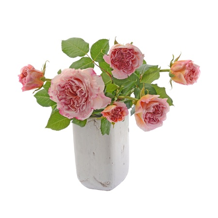 matherday: Bouquet of pink and cream china roses in vase isolated on white background