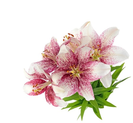 funeral background: Bouquet of tiger lillies  isolated on white background Stock Photo