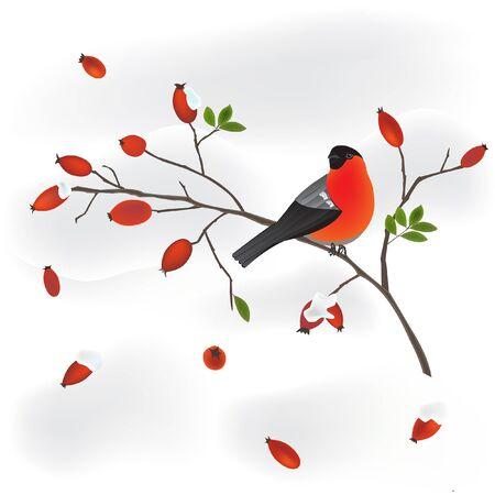 orange rose: robin on a wild rose branch Illustration
