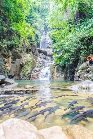 black fish: Waterfall with lots of black fish and rocks also a beautiful forest in Chanthaburi Thailand. Stock Photo