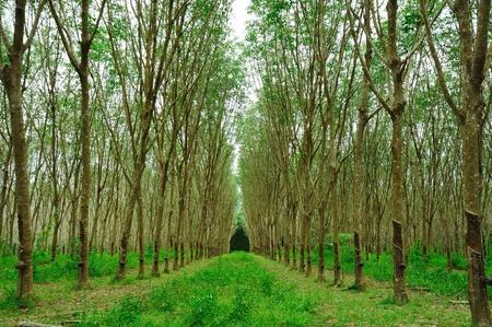 enchanting: Enchanting Forest Path
