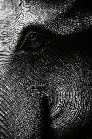 elephant head: Elephant Head in Black and White