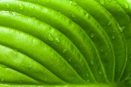 Closeup of a green leaf. Nice to use as background. Stock Photo - 9986019