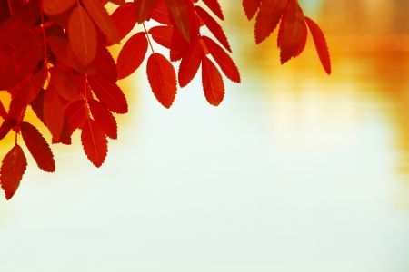 Colorful Autumn Leaves  Nice to use as autumn background Stock Photo - 16819767