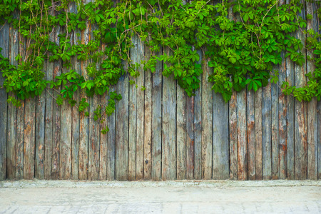 Green leaf on the wooden fence. Nice to use as background. Foto de archivo