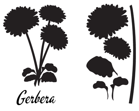 Gerbera silhouette vector illustration. Bouquet of gerberas. Set of flower elements. Part of the flower silhouette series.  Suitable for cutting, print. Template for cutting, greeting card, decoration