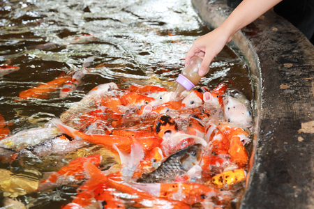 cyprinidae: Carp is a common name for various species of freshwater fish of the family Cyprinidae