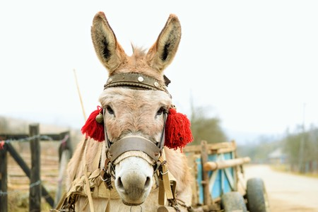 A donkey waiting for his owner Stock Photo