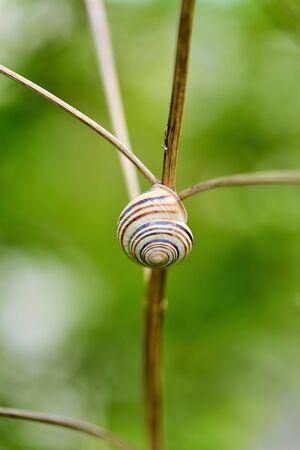 gastropod: Gastropod shell
