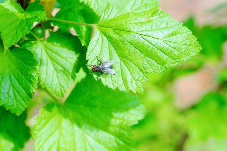 Fly in closeup shot  Stock Photo
