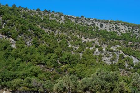 vegetation: Mediterranean vegetation Stock Photo