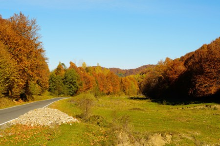 red mountain: Autumn colors in the forest and a road