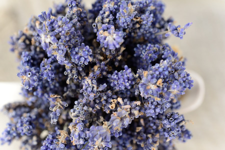 disinfect: Lavender, the health benefits of lavender essential oil include its ability to eliminate nervous tension, relieve pain, disinfect the scalp and skin and treat respiratory problems. Stock Photo