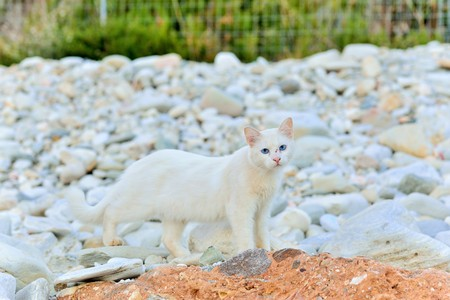 taverna: Greek white cat on white stones. The feline friends are all over Greece just waiting to snap up a tid-bit under the taverna table or find a shady spot to snooze all day...its a cats life... Stock Photo
