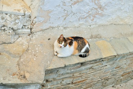 tidbit: Greek cats. The feline friends are all over Greece just waiting to snap up a tid-bit under the taverna table or find a shady spot to snooze all day...its a cats life...