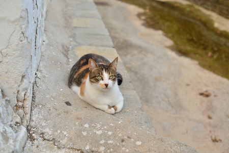 taverna: Greek cats. The feline friends are all over Greece just waiting to snap up a tid-bit under the taverna table or find a shady spot to snooze all day...its a cats life...