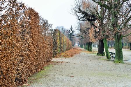 schoenbrunn: gardens in November, Vienna, Austria Editorial
