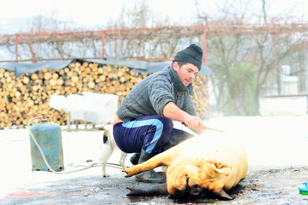 Pig Slaughter. Each year, on Ignat Day (St. Ignatius), on December 20th, Romanian families, especially those in the countryside, sacrifice their pig in order to have a rich meal for Christmas