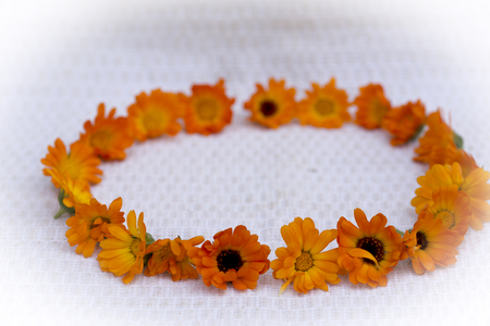 The marigold is known for its bright orange colored flowers as well as its numerous medicinal properties
