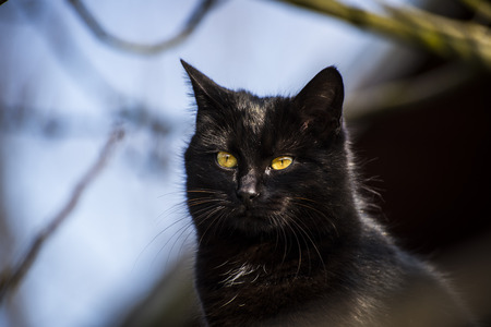 Black cat, some cultures are superstitious about black cats, ascribing either good or bad luck to them