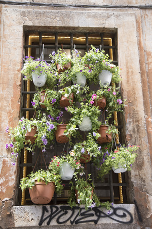 A window full of flower pots on a street in Rome, Italy