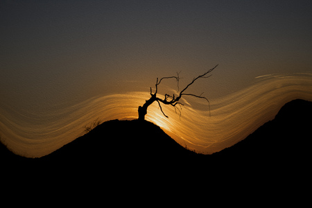 A dry tree on a hill at sunset