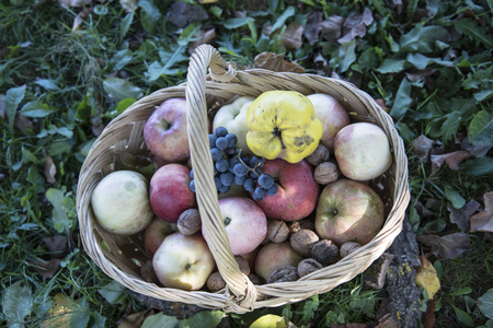 A basket full of apples, quince, walnuts, grapes signifying the riches of the autumn