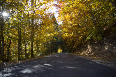 A road among the trees and the wonderful colors of autumn