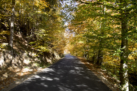 A road among the trees and the wonderful colors of autumn 写真素材 - 120371019