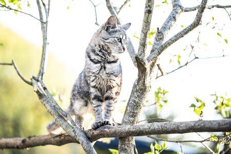 A graceful cat in a tree
