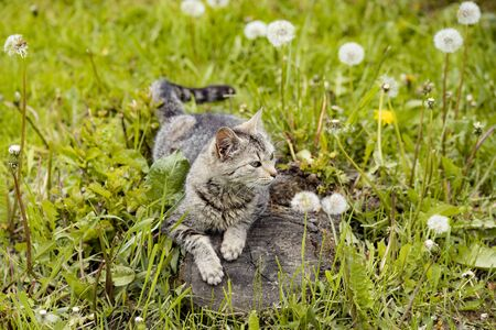 A cat resting on the grass and watching the birds