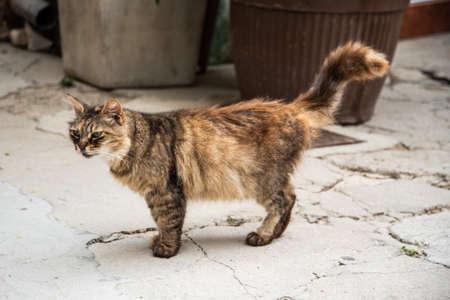 A cat on the streets of Baska, Croatia