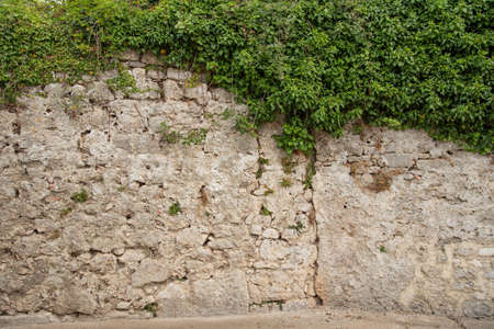 A stone wall from Roman times in the city of Krk, Croatia and a hanging plant that partially covers it. Ideal photo for photo background