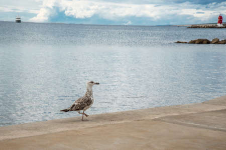 A seagull walking gracefully on the seafront and in the distance a ship and a lighthouse