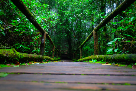 wail: the wooden bridge in the rain forest